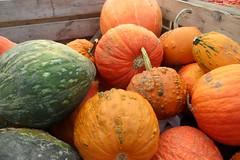 Marché Jean-Talon : Courges / Pumpkins