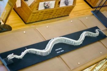 Anaconda skeleton