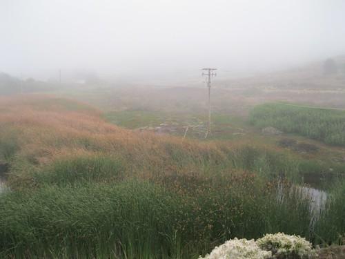 Mori Point Wetlands in September Fog