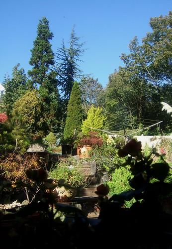 Maureens Garden