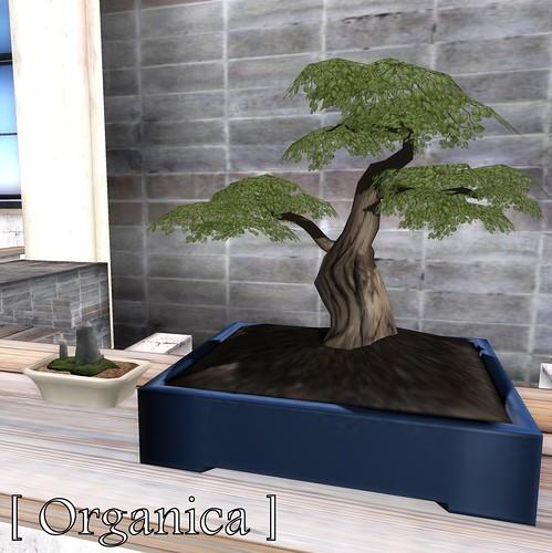 SL House & Garden Hunt - [ Organica ]