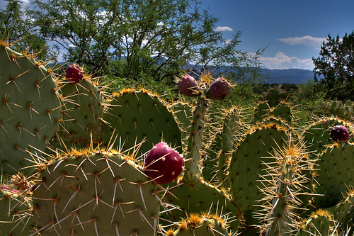 Prickly Pear 001