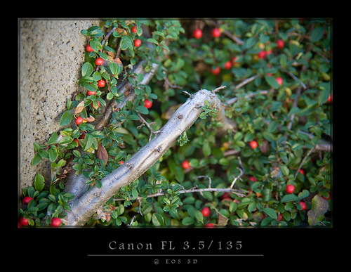 Canon FL 3.5/135 @ EOS 5D