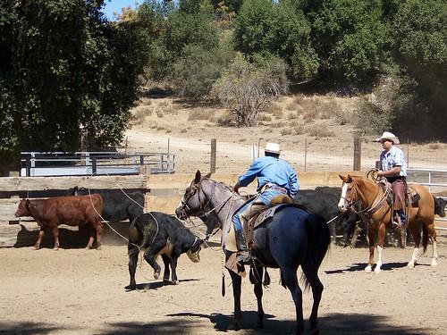 ranch roping #3.9.2010