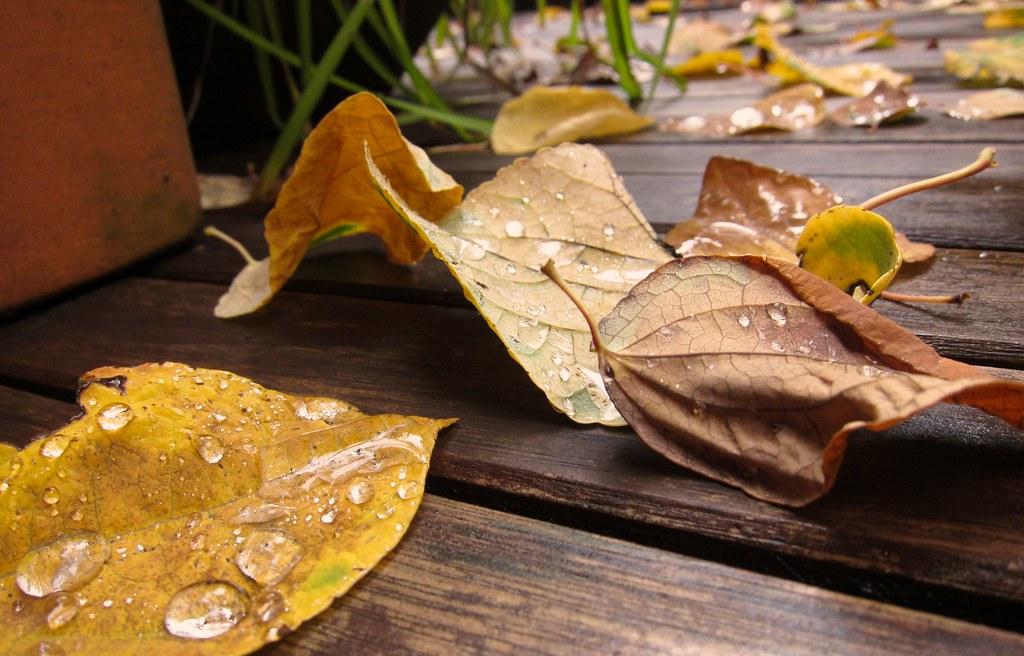 Fall in earnest...