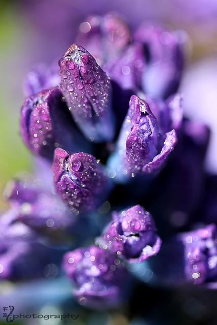 Spring Sparkle