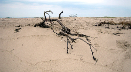 20100806 1326 - Cape Cod - North Shore - driftwood - IMG_2028