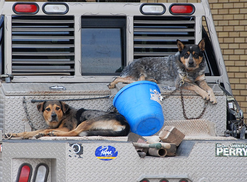 truck dogs