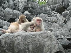 Monos de Monkey Island