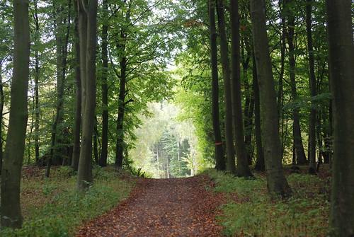Among trees 3