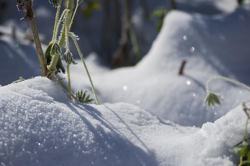 gioielli nel gelo