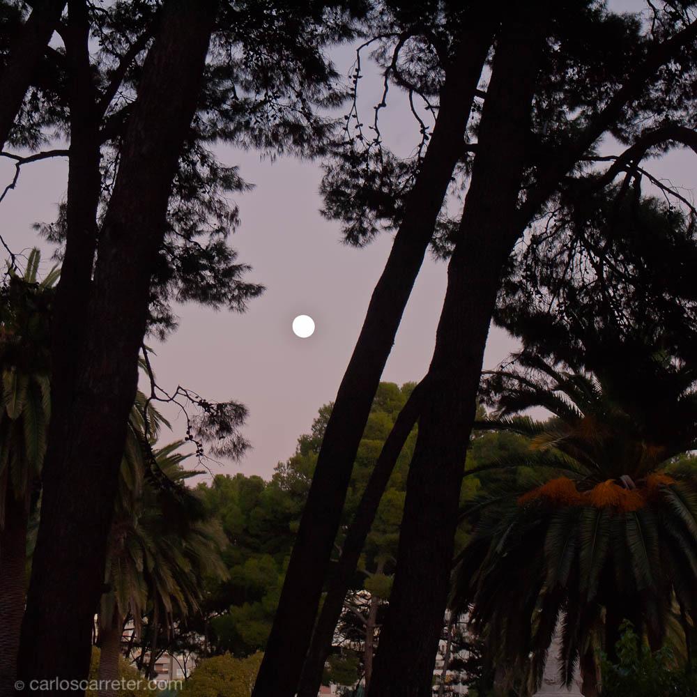 La luna entre los pinos y las palmeras