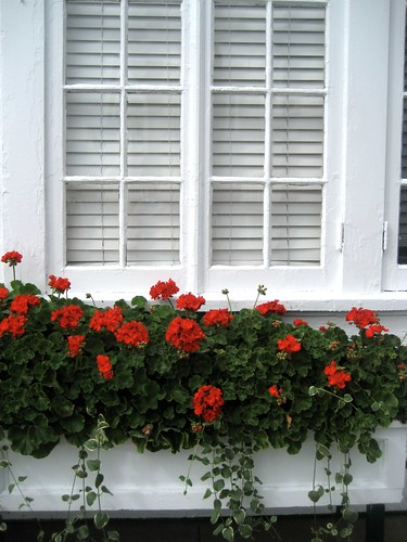 Red Geraniums and White Woodwork, My Fave