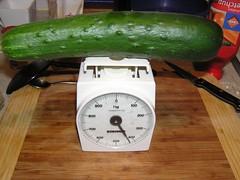 Komkommer gekweekt