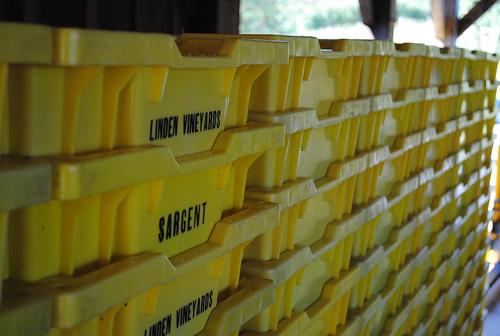 Harvest Bins, Linden Vineyards