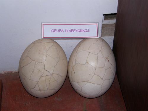 Huevos de Aepyornis