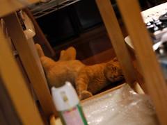 20100907:最近のお猫様#01