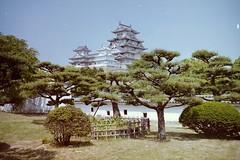 Himeiji behind trees