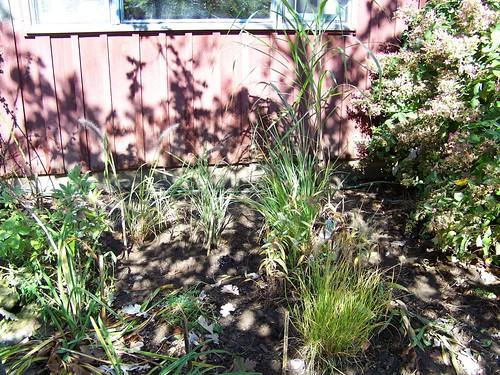 grassbed