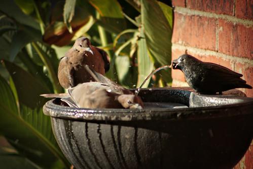 Bird Bath_5614