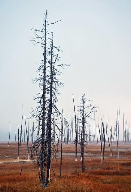 USA_196_Yellowstone_114