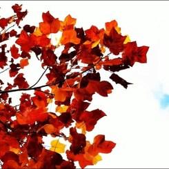 秋だねぇ~!