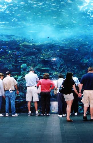 People Watching at the Georgia Aquarium