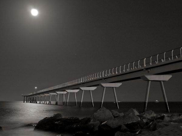 Mientras la luna bañaba el mar