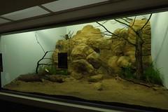 333 - 2017 07 01 - Oude siamangverblijven gerenoveerd voor kleine zoogdieren