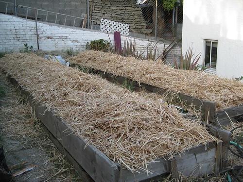 Garden 5: Straw layer