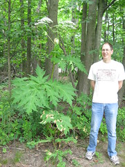 Giant Hogweed and Bob