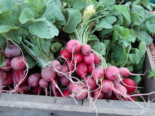 tiny radishes