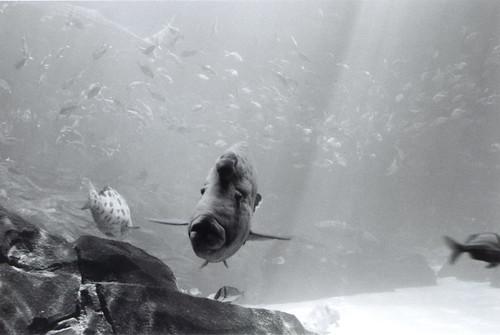 georgia-aquarium---bw-00