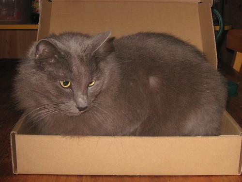 Samantha in a box