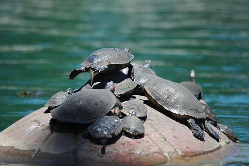 TurtleYoga4