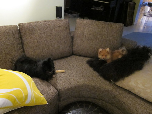 New Couch + Dogs
