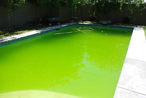 295/365 green