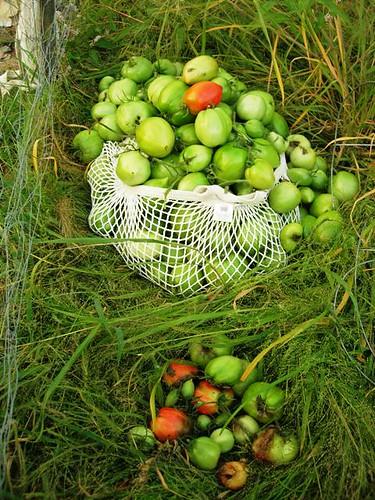 greentomatoes
