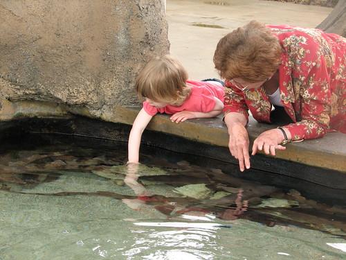 Petting Sharks (my brave girl with Grandma)
