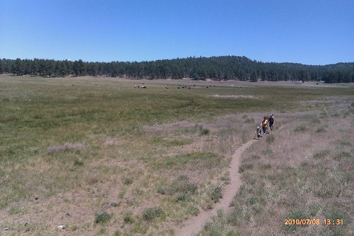 Laguna Mountain Meadow