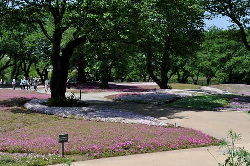 Pink Moss carpets