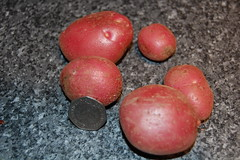 10 07 08_potatoes_0004