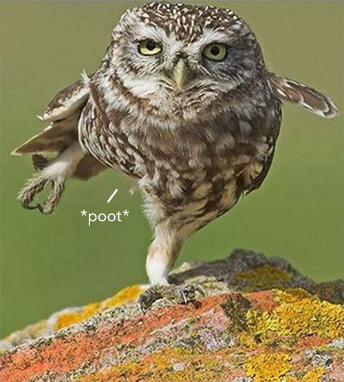 *Poot*
