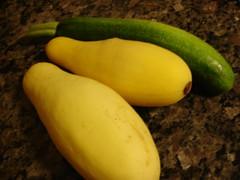 the first garden squash