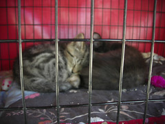 call the SPCA, the cutest kittens in the world need a home