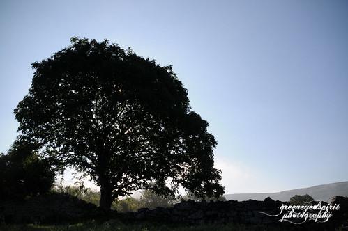 wiseoldtree