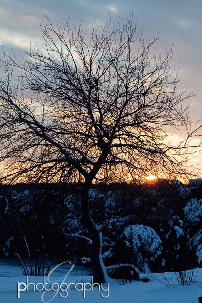 Snow & trees at twilight
