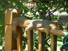 Too hot, too relaxed or too stuffed