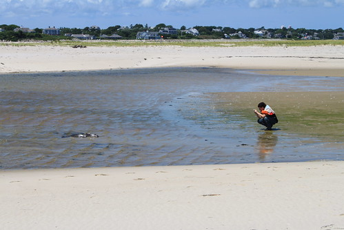 Cape Cod - Chatham Bars Inn - North Shore - Clint Photographing Dead Seal