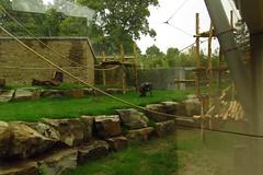 346 - 2017 07 01 - Inkijk in het chimpanseeverblijf